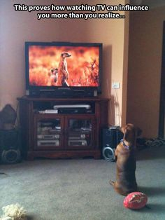 This dog wants to be a meerkat // funny pictures - funny photos - funny images - funny pics - funny quotes - #lol #humor #funnypictures