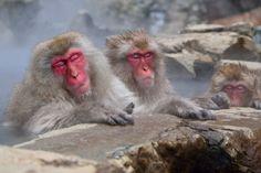 Oh!Lovely!!長野・温泉猿に萌える「地獄谷野猿公苑」   長野県   Travel.jp[たびねす]