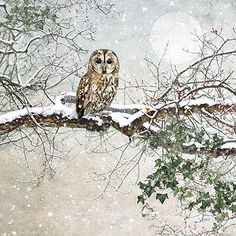 Tawny Owl - christmas card design by Jane Crowther for Bug Art greeting cards.