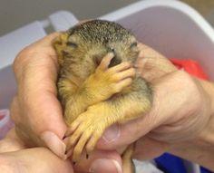 Baby Squirrels Orphaned in Colorado Flood