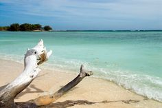 A beach on the western side of the island Grain Of Sand, Bucket List Destinations, Driftwood, Wonders Of The World, Coastal, Island, Seychelles Honeymoons, Travel, Outdoor