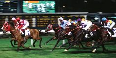 Horse race Happy Valley Hong Kong