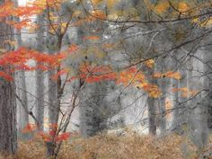 Michigan, Upper Peninsula. Forest of Maples and Ferns Photographic Print by Julie Eggers at Art.com