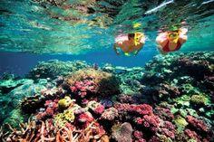 25% OFF Bali Snorkeling: Nusa Lembongan Snorkeling Day Trip - 0