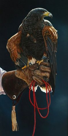 Falconers Hunt