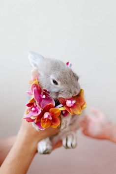 Bunny wearing a lei of ombre orchids | Photo by Yolande Marx | Floral design by Fleur le Cordeur