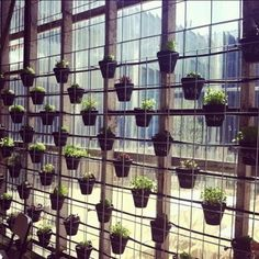 building your edible green wall 2
