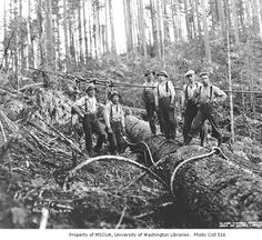Choker setters at camp no. Weyerhaeuser Timber Company, n. :: Kinsey Brothers Photographs of the Lumber Industry, Kelso Washington, Washington State, Forest Pictures, Old Pictures, Timber Companies, White Tractor, Timber Logs, Logging Equipment, Old Trees