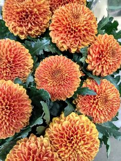 Wholesale flowers fresh from the farm Order yours today Chrysanthemums, Buying Wholesale, Fresh, Flowers, Plants, Florals, Planters, Flower, Blossoms