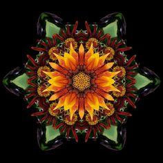 Flower Mandalas—Bring Out Your Inner Bee Flower Mandala, Mandala Art, Flower Art, Sunflowers And Daisies, Mandala Meditation, David J, Circle Art, Passion Flower, Book Projects