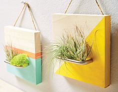 Air plants come in an array of interesting shapes and colors for a variety of projects. We'll help you get started with a few ideas.
