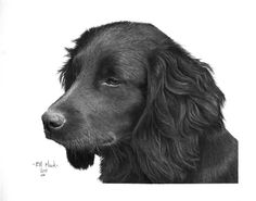 drawing Ann Dahl-  my dog