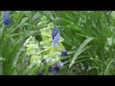 Relaxing Nature Sounds ~ Birds Chirping ~ Blackbird and Chaffinch (1 HOUR)