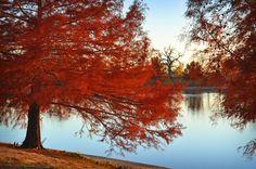 Fall at the pond...Norman,Oklahoma