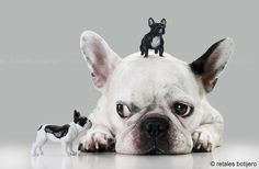 """Dude, whats happeninnnnnnnnng?"", French Bulldog with figurines."