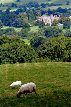 Sheep grazing above century Sudeley Castle, Gloucesteshire England Ireland, England And Scotland, Places Around The World, Around The Worlds, English Countryside, British Isles, Country Life, Great Britain, Dream Vacations