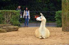 大型動物 キリンとかシマウマとかとか...見たかったんだけど途中で超大雨になって退散!これがイギリス。。。結局小型動物と爬虫類系だけ見ました(笑)でも十分楽しめたので満足!♡London Zooの動物のおりは、有名な建築家達がたずさわってい