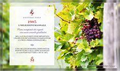 """Il """"Progetto Castello di Fonterutoli"""" nasce nel 1985 con i primi impianti dei vigneti nella zona di Siepi sostenuti da nuovi concetti qualitativi. @marchesimazzei #fonterutoli #marchesimazzei #wine #tuscany"""