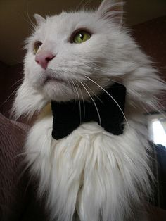 Secret Agent Collar by A. Brinkman on Ravelry. A bow-tie collar for your secret agent cat, knit flat. Knitting Patterns Free, Free Knitting, Free Pattern, Crochet Patterns, Animal Sweater, Animal Projects, Craft Projects, Cat Bow Tie, Knit Basket