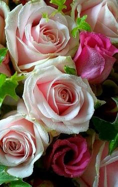 Your roses Blessed Friday - انا شاب - Google+