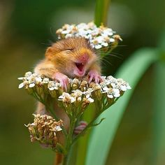 My Wildlife - 22 cute animals that smile at us - Amazing Animals - Animales Smiling Animals, Happy Animals, Animals And Pets, Wild Animals, Images Of Animals, Cute Animal Memes, Cute Funny Animals, Funny Animal Pictures, Cute Animal Photos