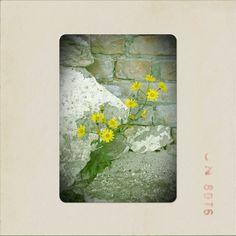 Yellow flower...