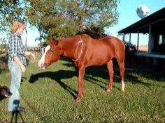 Free Horse Trick Training Pack. Fun way to increase bond and communication with your horse.