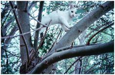 Analog Street / Walk00033 Catz on tree