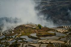 Popular on 500px : Douish rice terrace by enryba