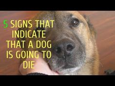 Large Dogs, Small Dogs, Normal Vital Signs, Small Dog Names, Dog Crying, Loss Of Dog, Dog Cleaning, Dog Died, Man And Dog