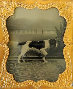 Pair_Tintype_Hunting_Dogs_Photograph