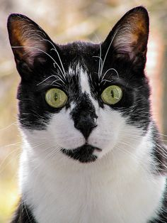 Green-eyed #cats