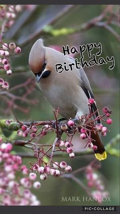 We found and raised a cedar waxwing. We were blessed to know a cedar waxwing! Pretty Birds, Love Birds, Beautiful Birds, Animals Beautiful, Cute Animals, Animals Amazing, Pretty Animals, Buy Birds, Beautiful Images