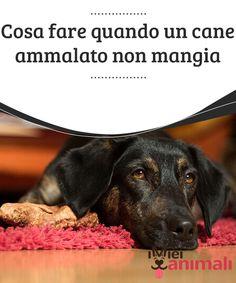 Cosa fare quando un cane ammalato non mangia  Sono molte le #situazioni che possono portare un #cane ad ammalarsi: raffreddore, #influenza #intestinale, ghiandole #perianali gonfie, ecc. #ALIMENTAZIONE