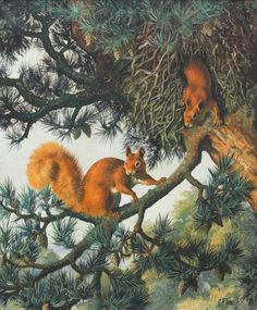 C. F. Tunnicliffe - Red Squirrels and drey