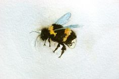 watercolor bumble bee