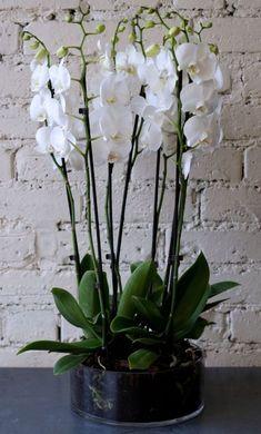 Орхидеи в интерьере - Дизайн интерьеров   Идеи вашего дома   Lodgers