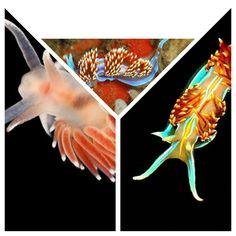 Sea slugs collage 13