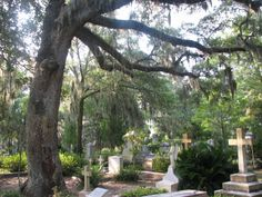 I know I'm totally weird, but I love this cemetery in Savannah, Ga.