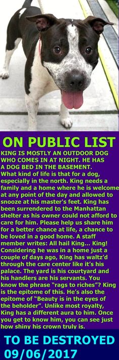 MURDERED 9-6-2017 --- Manhattan Center  My name is KING. My Animal ID # is A1123366. I am a male black and white pit bull mix. The shelter thinks I am about 1 YEAR 7 MONTHS old.  I came in the shelter as a OWNER SUR on 08/31/2017 from NY 10040, owner surrender reason stated was LLORDPRIVA.  http://nycdogs.urgentpodr.org/185455-2/#
