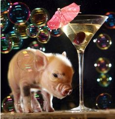 I knew a mini pig was the pet for me lol Teacup Piglets, Baby Piglets, Cute Piglets, This Little Piggy, Little Pigs, Cute Baby Pigs, Small Pigs, Mini Pigs, Pet Pigs