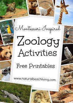 Montessori inspired zoology, animals, free printables, 12 months of Montessori Learning activities, ideas, printables,giveaways & more. Natural Beach Living