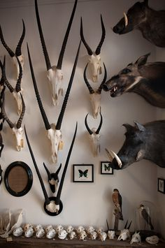 Being from South Africa, I grew up very accustomed to taxidermy and I use it a lot in my work, but I know its controversial so I also love faux trophies made from resin, paper, or ceramics. Taxidermy Decor, Taxidermy Display, Trophy Rooms, Cabinet Of Curiosities, Safari, Animal Skulls, Skull And Bones, Memento Mori, Natural History