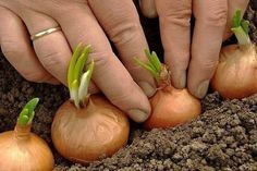 Полное собрание дачных хитростей для садоводов! – БУДЬ В ТЕМЕ
