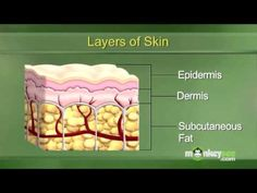 Understanding the Layers of the Skin