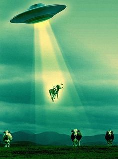 UFO picks up a cow with a We Are Social logo on its butt. Art Alien, Alien Aesthetic, Phone Wallpaper Images, Unidentified Flying Object, Alien Spaceship, Space Aliens, Alien Abduction, Psy Art, Aliens And Ufos