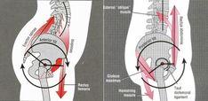 Упражнения для коррекции переднего наклона таза