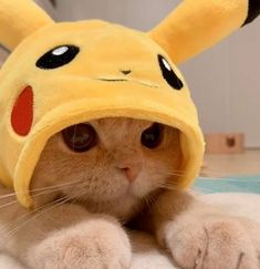 Cat Dressed As Pikachu Is Charming As Heck Cute Baby Cats, Cute Little Animals, Cute Cats And Kittens, Cute Funny Animals, Kittens Cutest, Baby Kitty, Funny Kitties, Ragdoll Kittens, Sleepy Kitty