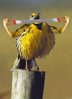 Funny Bird Exercising