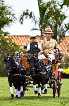 Future... by Raphael Macek - Horse Photography, via Flickr...ahhh! A pony team and child! SO cute!